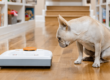 Совместимость роботов-пылесосов и домашних животных