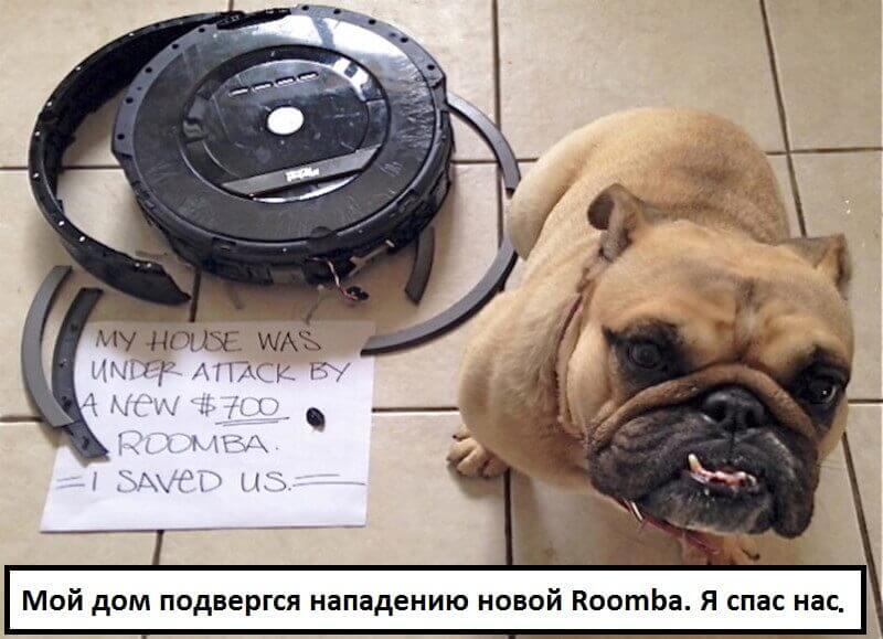 Собака погрызла робот-пылесос